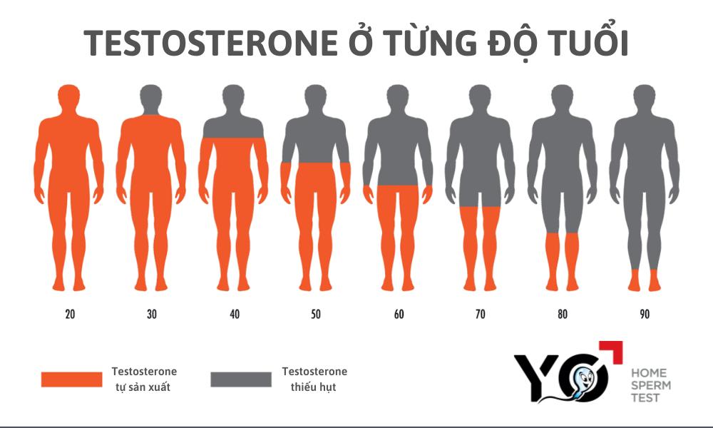 Testosterone sụt giảm do suy tinh hoàn