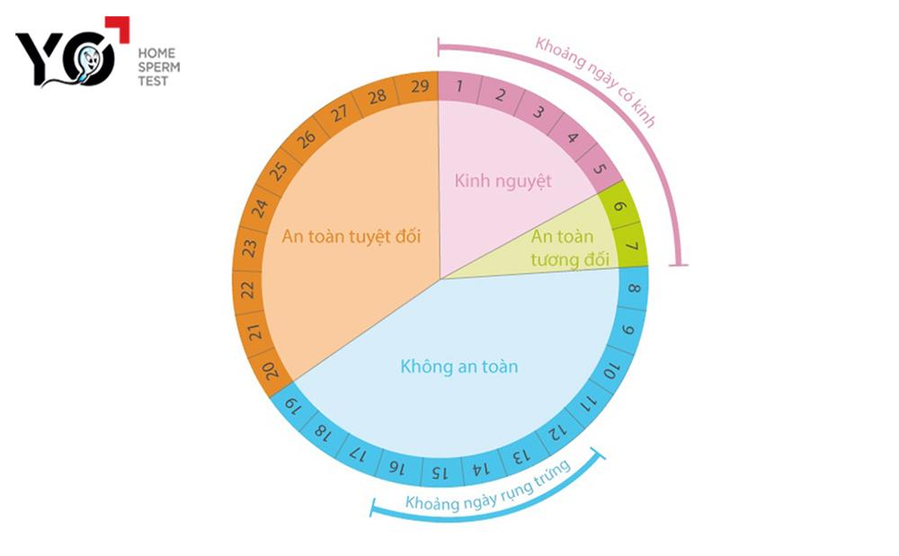 Ngày rụng trứng trong 1 chu kỳ kinh nguyệt trung bình 28- 29 ngày của phụ nữ